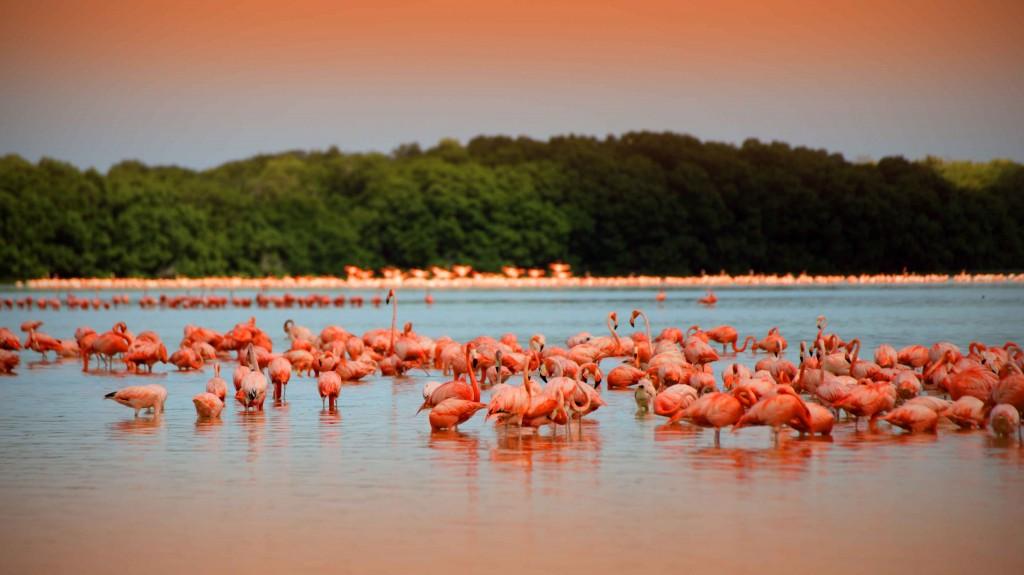rio-de-los-flamingoes-celestun-yucatan